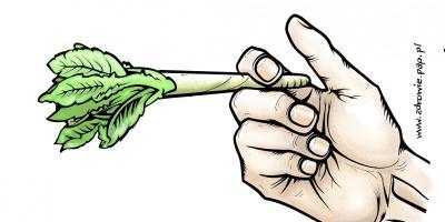 Nastolatki przestają obawiać się marihuany i haszyszu
